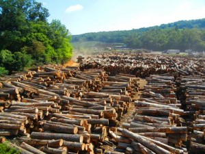 Turman Lumber Log Yard