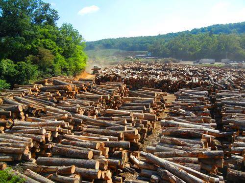 Standing timber buyer turman lumber